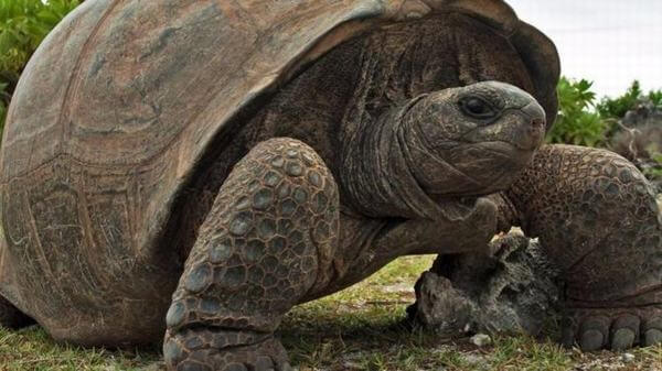 Khi nằm mơ thấy rùa liên quan đến con số gì?