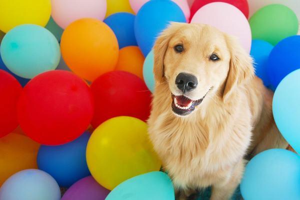 Sinh năm 1970 là tuổi con Chó (Canh Tuất). Năm sinh dương lịch: Từ 06/02/1970 đến 26/01/1971. Năm sinh âm lịch: Canh Tuất.