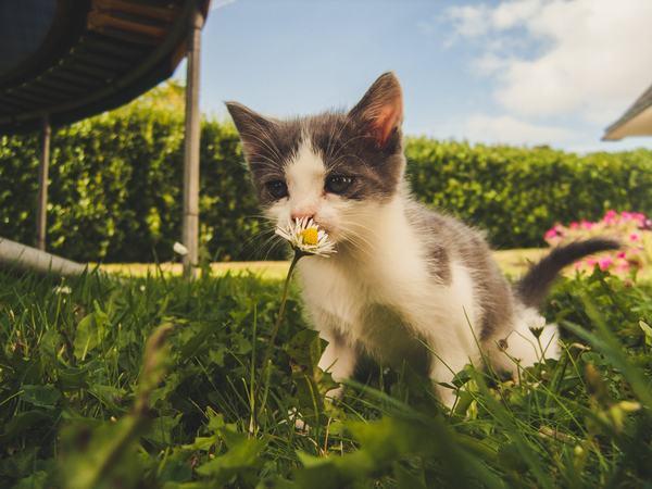 [GMGM] Nằm mơ thấy mèo con, mèo đen (mèo trắng, vàng) cắn bạn đánh con gì, mơ thấy mèo và rắn đánh nhau điềm báo gì 1