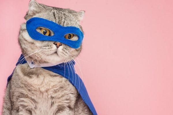 [GMGM] Nằm mơ thấy mèo con, mèo đen, mèo trắng vàng đánh con gì, mơ thấy mèo và rắn đánh nhau điềm báo gì?