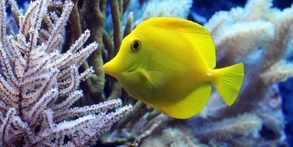 Giấc mơ bắt được một con cá lớn cho thấy mọi thứ đang diễn ra tốt đẹp.