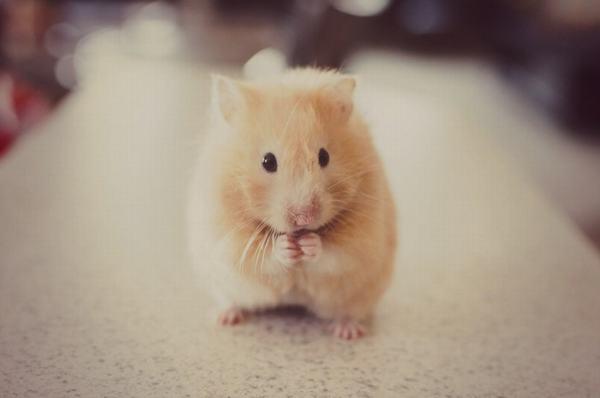 Nằm mơ thấy chuột đánh con gì?