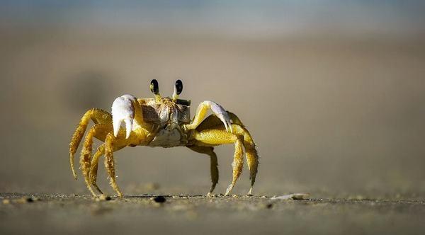 Cua là loại động vật giáp xác, có 8 chân, chỉ có thể di chuyển theo chiều ngang cả trên bờ lẫn dưới nước.