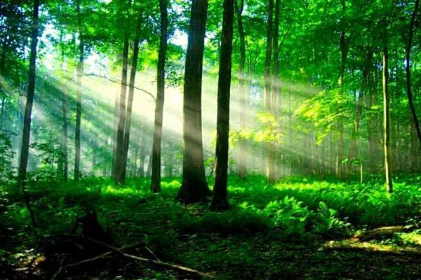 Tử vi mệnh Bình Địa Mộc (cây vùng đồng bằng) đầy đủ: nghĩa là gì, hợp màu gì mệnh nào?