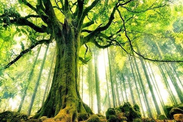 Người thuộc mệnh Mộc bản tính vốn được ví như một rừng cây tươi mát, một sức sống xanh tươi