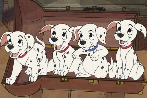 Nằm mơ thấy đàn chó con, đàn chó mới đẻ mang điềm báo gì và nên đánh con số nào?