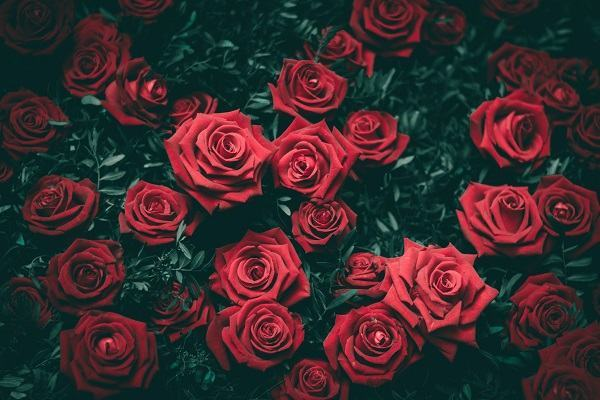 Nằm mơ thấy hoa hồng đánh con gì | Giải mã chiêm bao thấy hoa hồng và các điềm báo tốt xấu