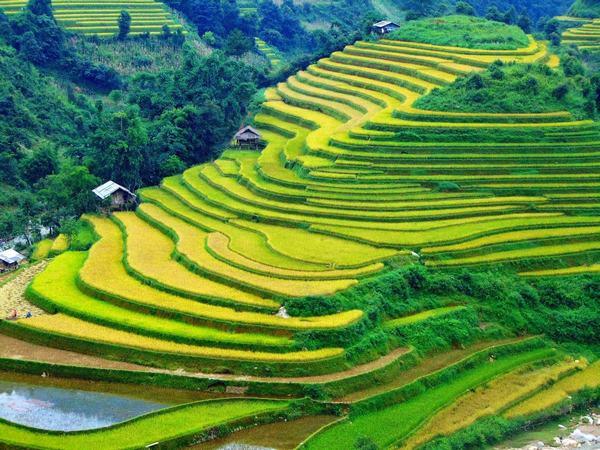Lúa được xếp vào một trong năm loại cây lương thực chính của thế giới