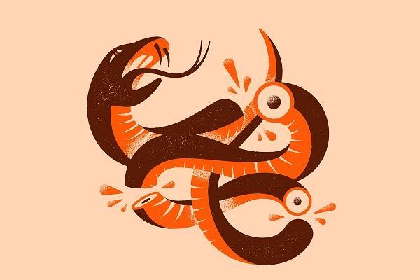 Ngủ nằm mơ thấy rắn chết đánh con gì, là điềm gì | Ngủ thấy rắn bị đập chết đi sống lại và ý nghĩa toàn tập