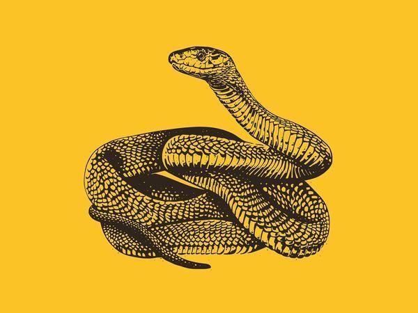 Mơ thấy rắn vàng đuổi mang đến may mắn cho chủ nhân giấc mơ.