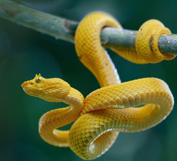 Rắn có vô số chủng loại, vô số màu sắc, chúng sở hữu độc tính cũng như kích cỡ khác nhau