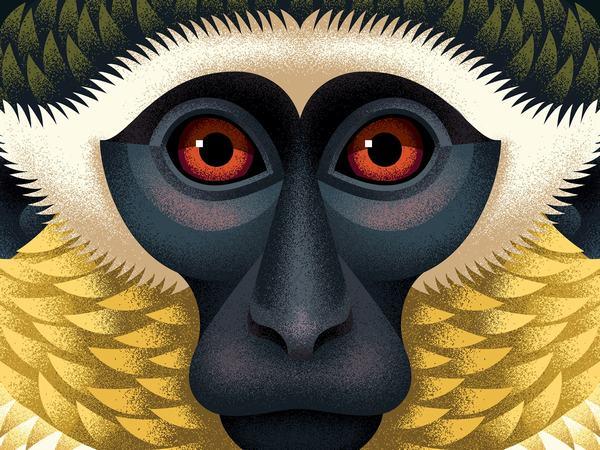 Ý nghĩa hình tượng con khỉ trong các nền văn hóa